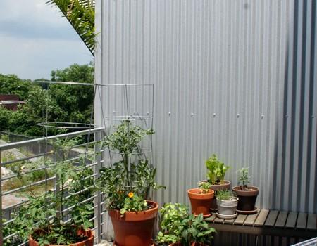 Our Balcony Garden