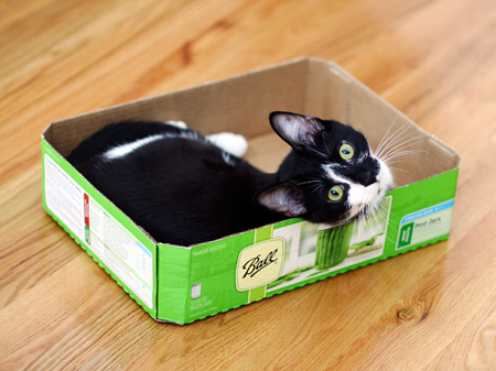 Cat in a Canning Box