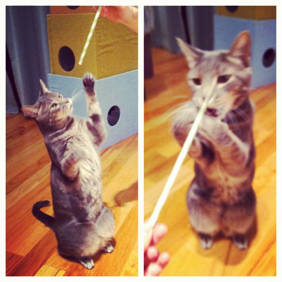 Cats Love Paper Straws