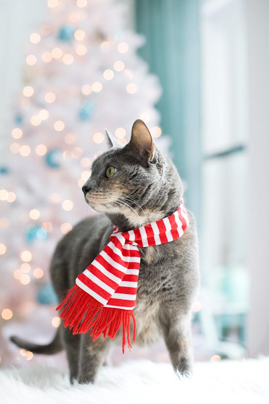 Christmas Cats Kalypso