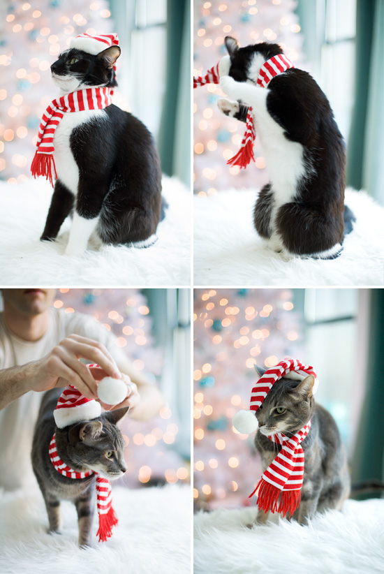 pinterest winter family photo ideas - Merry Christmas Love the Cats