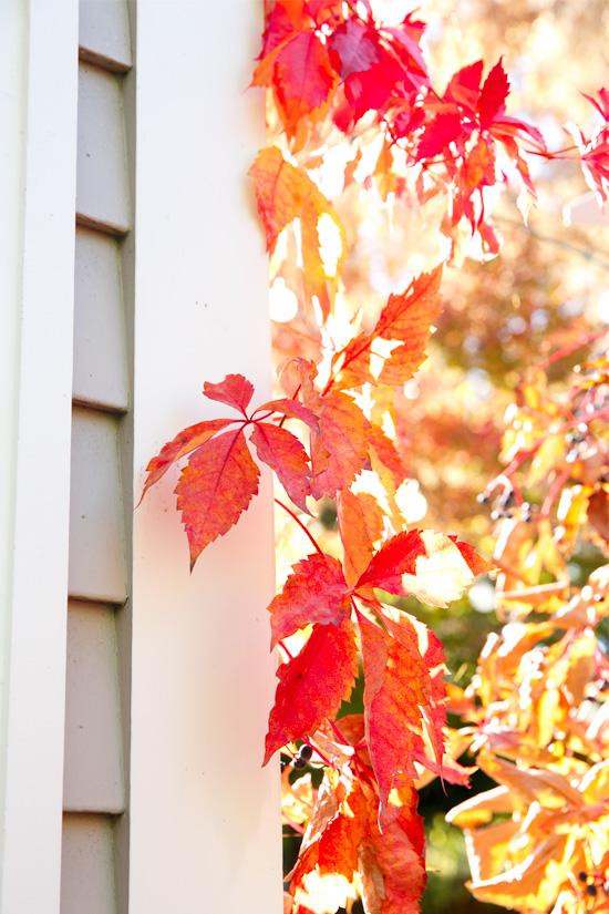 Autumn in Jacksonville, Oregon