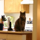 Cats on the counter. Some things never change.