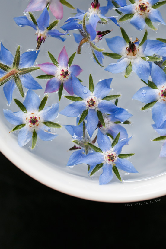 Borage flowers waiting to be candied