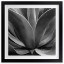 minted-succulent