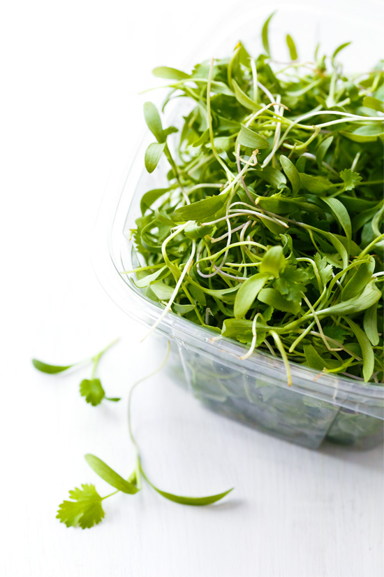 Micro Cilantro for Tortilla Soup