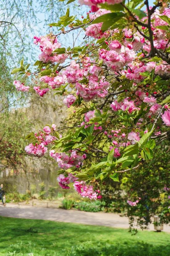 English Gardens in London