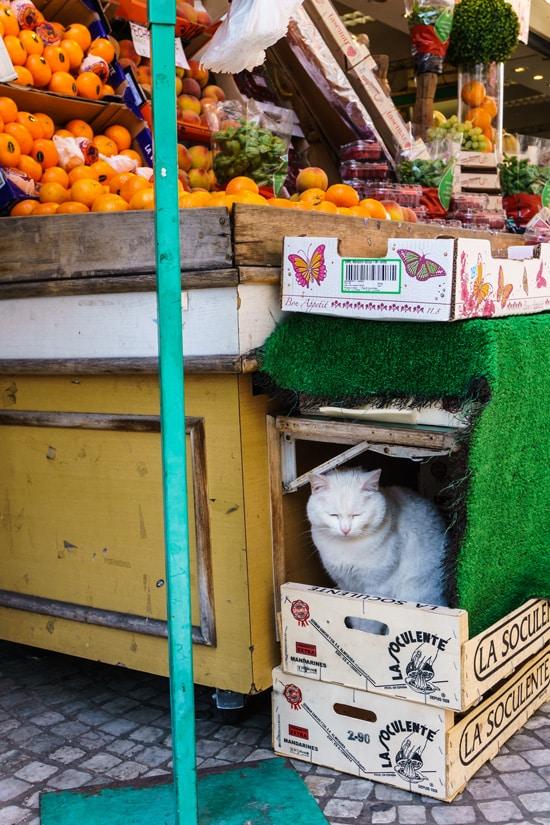 Le Chat du Marché
