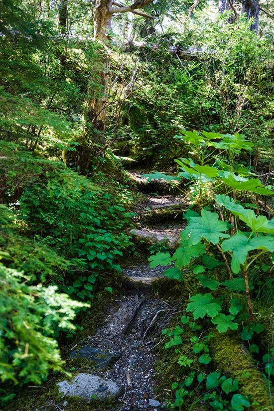 Forest Path, Ketchikan, Alaska