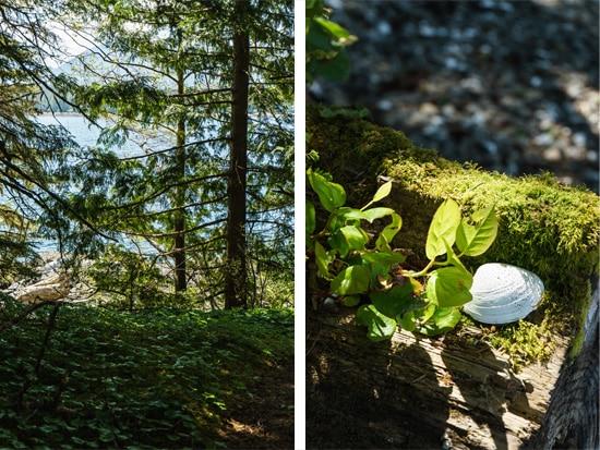 Beautiful Woods in Ketchikan, Alaska