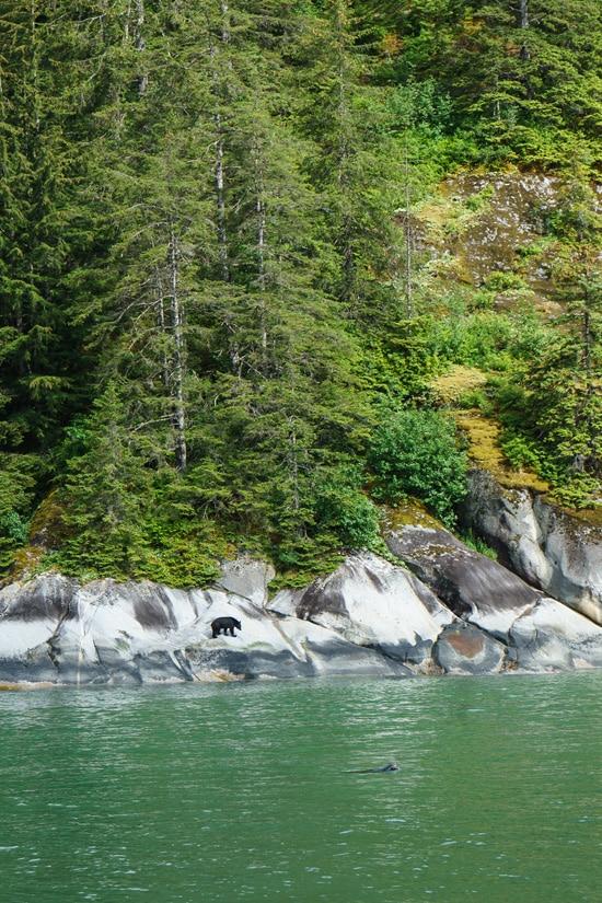 Wildlife Spotting, Tracy Arm Fjord, Alaska