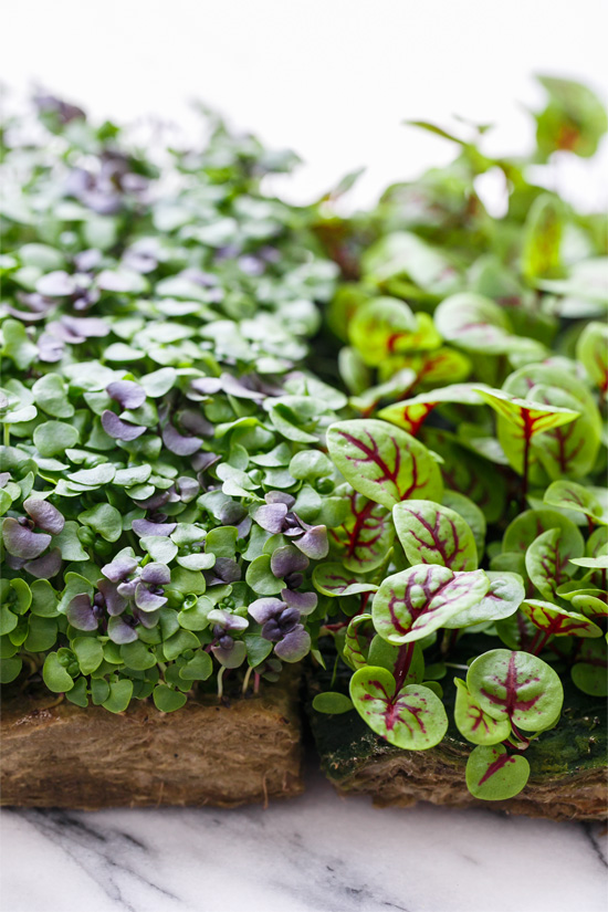 Microgreens: Micro Basil and Micro Red Sorrel