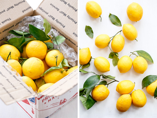Meyer Lemons for Homemade Limoncello