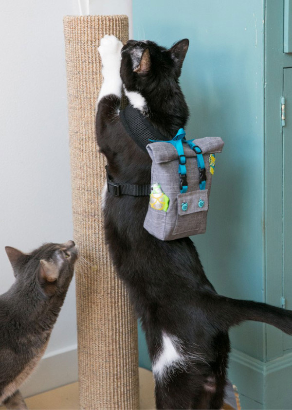The Desmond Rolltop Backpack - for Cats.