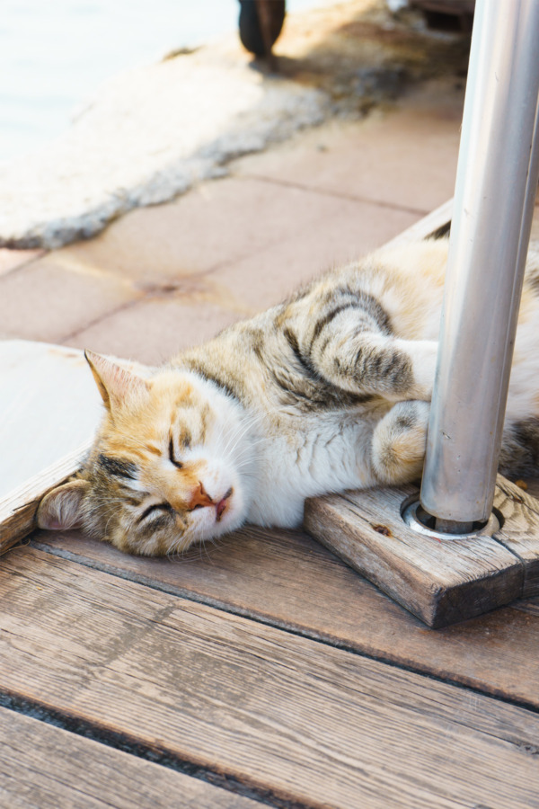 Carnival Vista Mediterranean Cruise: Sleeping Kitty in Kusadasi, Turkey