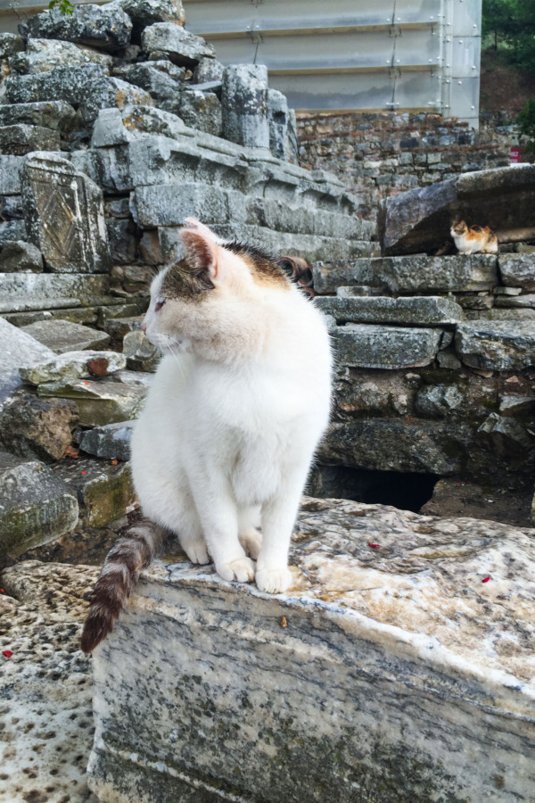 Carnival Vista European Cruise: Cats of Ephesus