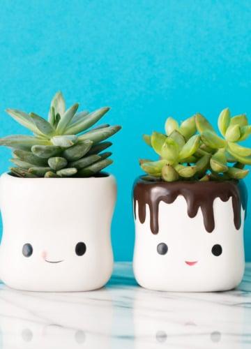Cute Succulents in Hot Chocolate Cups
