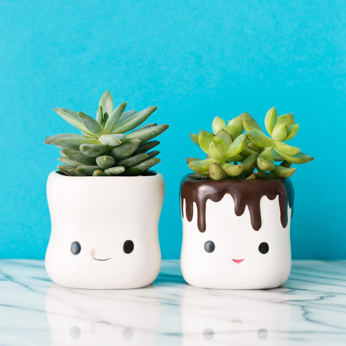 Cute Succulents in Hot Chocolate Cups