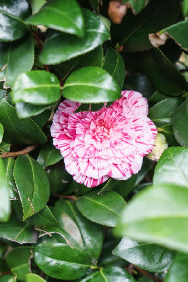Tokyo in Bloom
