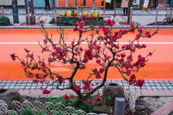 Asakusa neighborhood, Tokyo Japan