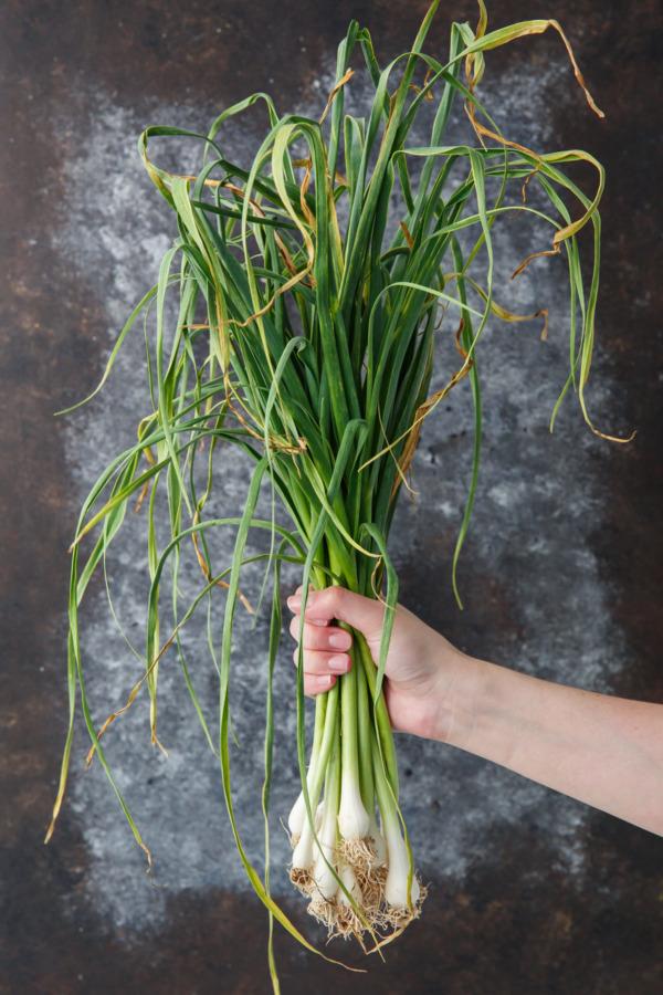 Green Garlic aka Spring or Young Garlic