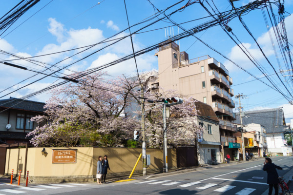 Kyoto streets and cherry blossoms