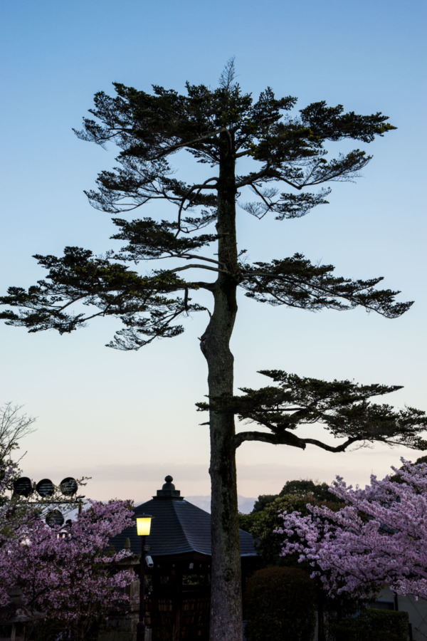View from the Kiyomizu-dera Temple, Kyoto, Japan