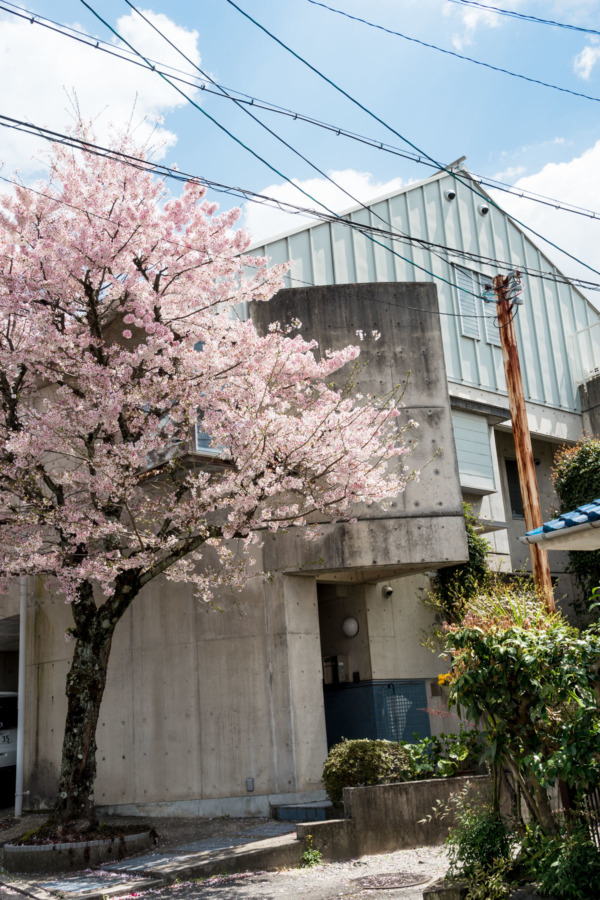 Kyoto in Springtime: Streets and Cherry Blossoms