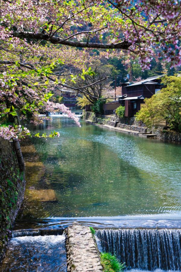 Arashiyama Park along the Katsura River, Kyoto Japan