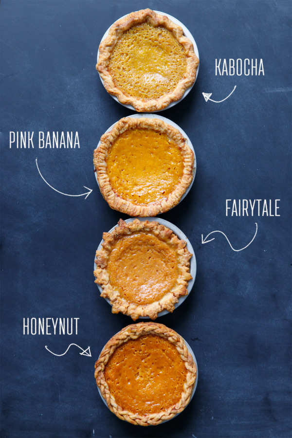 Which kind of squash makes the best pumpkin pie?