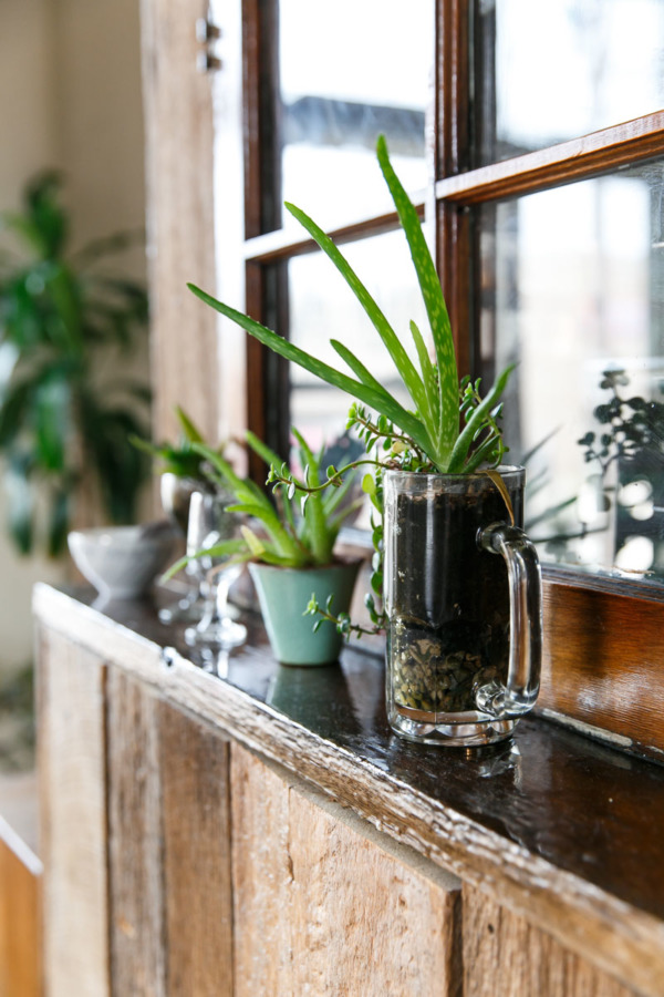 Loving these upcycled houseplant containers at The Table restaurant in Columbus, OH