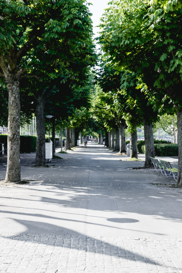 Tree-lined path along Lake Zurich, Switzerland