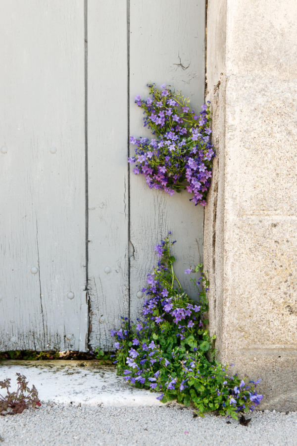 Street flowers in bloom, Fontevraud-l'Abbaye, France