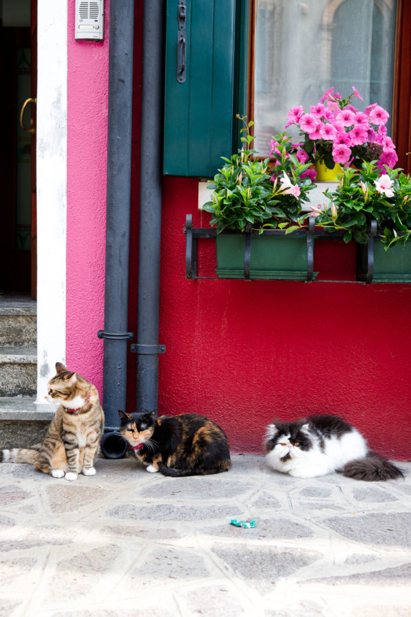The colorful cats of Burano, Italy
