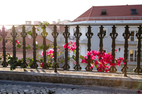 Bright pink Bougainvillea flowers on a railing in Lisbon, Portugal