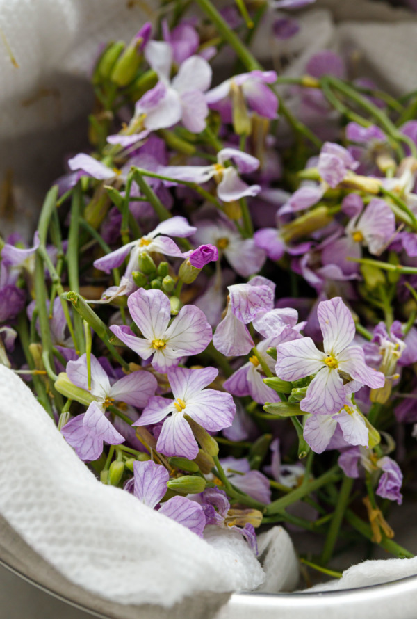 Bowl filled with fresh radish flowers, with purple veined petals and yellow centers.