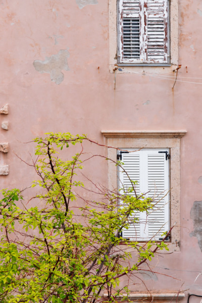 Pink wall, green tree. Dubrovnik, Croatia