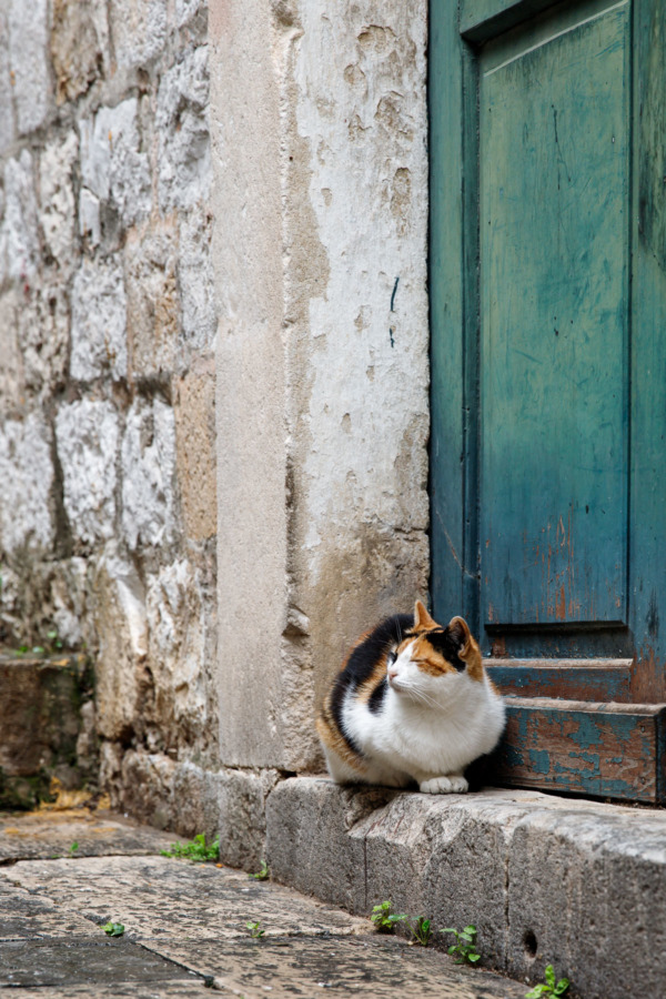 Calico cat sitting in front of a turquoise door, Dubrovnik, Croatia