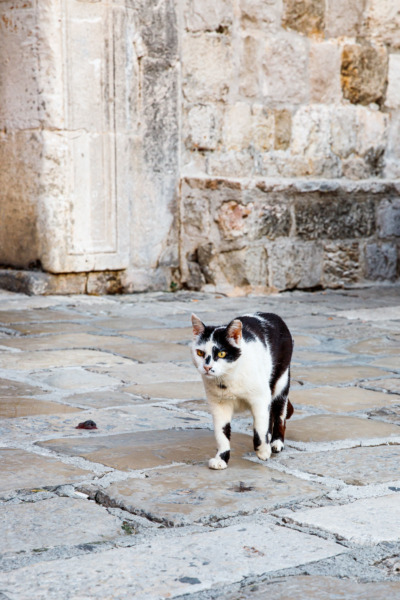 Black and White Cat in Dubrovnik, Croatia