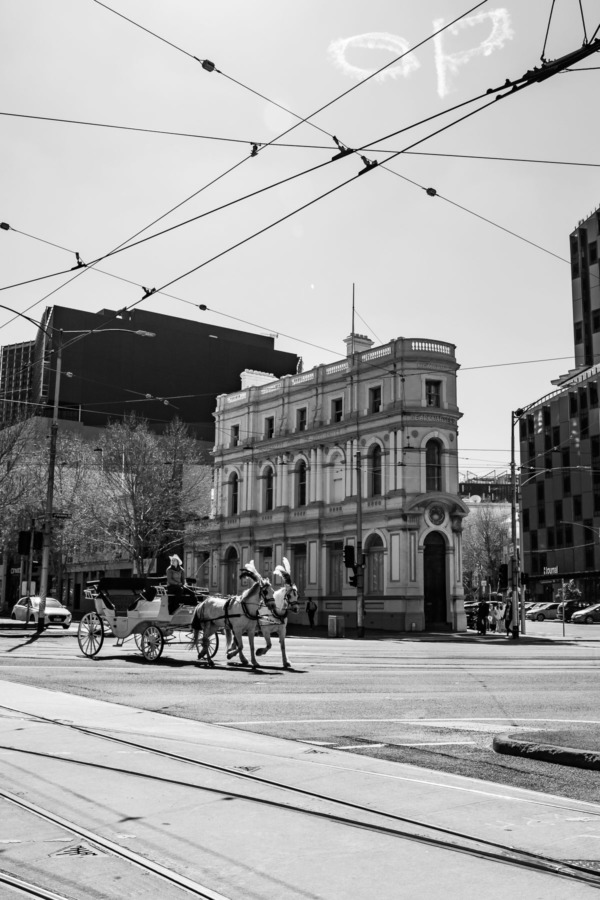 Black and white horse drawn carriage in Melbourne, Australia