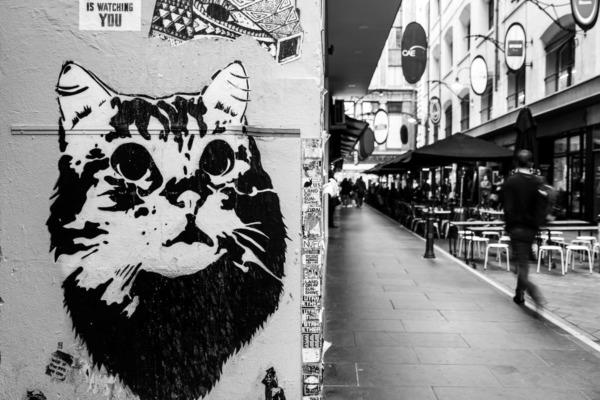 Cat street art, black and white, Melbourne, Australia